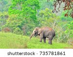 asia elephant is standing at a... | Shutterstock . vector #735781861