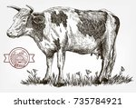 breeding cow. grazing cattle.... | Shutterstock .eps vector #735784921