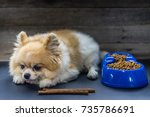 pomeranian dog lying lonely on... | Shutterstock . vector #735786691