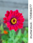 flower | Shutterstock . vector #735806077