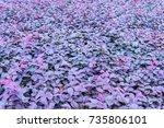 leaf | Shutterstock . vector #735806101