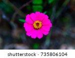 flower | Shutterstock . vector #735806104