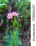flower | Shutterstock . vector #735806107