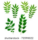 mixed leaves useful for photo...   Shutterstock . vector #73590022