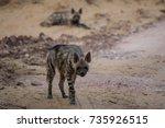 striped hyena in daylight ... | Shutterstock . vector #735926515