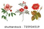 red rose flower. isolated on... | Shutterstock . vector #735934519
