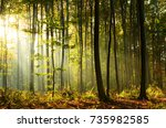 morning in the forest   Shutterstock . vector #735982585