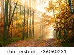 autumn forest | Shutterstock . vector #736060231