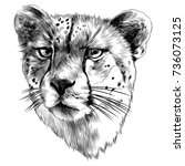 cheetah head sketch vector...   Shutterstock .eps vector #736073125