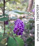 Small photo of Purple wild flower