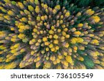 colourful autumn colours in... | Shutterstock . vector #736105549