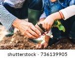 Stock photo senior man with grandaughter gardening in the backyard garden 736139905