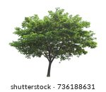 tree isolated on white... | Shutterstock . vector #736188631