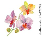 Watercolor Hand Drawn Orchid...