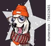 vector portrait of siberian... | Shutterstock .eps vector #736212631