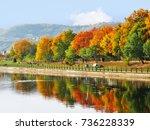 tree line in autumn colors... | Shutterstock . vector #736228339