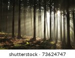Sunbeams Entering Coniferous...