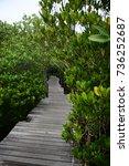 bridge in the woods   Shutterstock . vector #736252687
