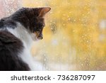 Stock photo the cat sits and looks out the window at the raindrops the autu 736287097