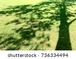 image of shadow of tree project ... | Shutterstock . vector #736334494