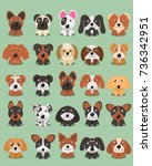dog breeds vector collection ... | Shutterstock .eps vector #736342951