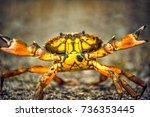 Small photo of crab crustacean nature