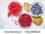 blueberries  pomegranate and... | Shutterstock . vector #736384864