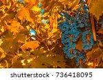 grape bunch  very shallow focus | Shutterstock . vector #736418095
