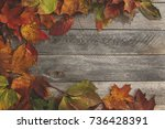 colorful autumn  leafs on the... | Shutterstock . vector #736428391