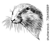 otter sketch head vector... | Shutterstock .eps vector #736440889