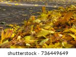 sidewalk tiles fallen leaves ... | Shutterstock . vector #736449649