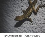 close up lizard with yellow... | Shutterstock . vector #736494397