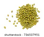 mung beans isolated on white... | Shutterstock . vector #736537951