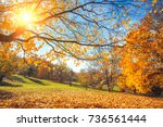 sunny autumn landscape with... | Shutterstock . vector #736561444
