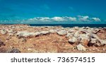 Petrified Forest Panorama In...
