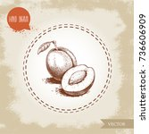 hand drawn sketch style plums... | Shutterstock .eps vector #736606909