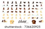 set of dogs labrador and golden ... | Shutterstock .eps vector #736620925