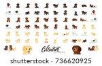 set of dogs labrador and golden ... | Shutterstock .eps vector #736620925