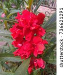 Small photo of Balsam Flowers