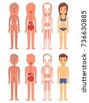 male and female skeleton ... | Shutterstock .eps vector #736630885
