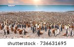 wide view of a massive colony... | Shutterstock . vector #736631695