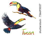 colorful tucans flying and... | Shutterstock . vector #736695037