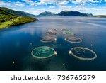 farm salmon fishing in norway...   Shutterstock . vector #736765279