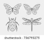 Stock vector vector set contour polygonal insects abstract geometric butterfly dragonfly beetle vector 736793275