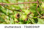 a close up view of some... | Shutterstock . vector #736803469