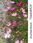 Small photo of flowers, herbaceous plant