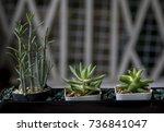 flowers | Shutterstock . vector #736841047