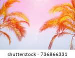 Two Palm Trees On Toned Purple...