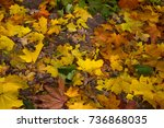 autumn in the forest | Shutterstock . vector #736868035