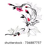hand drawn painting with... | Shutterstock . vector #736887757